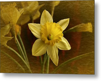 Metal Print featuring the photograph Vintage Yellow Narcissus by Richard Cummings