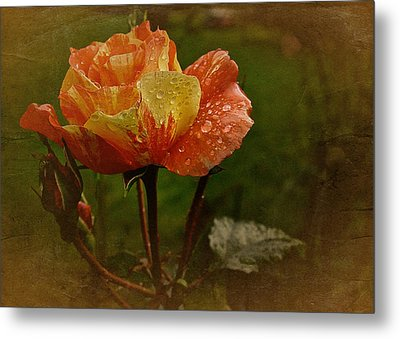 Vintage Sunset Rose Metal Print