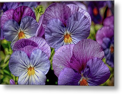 Metal Print featuring the photograph Viola by Bonnie Willis