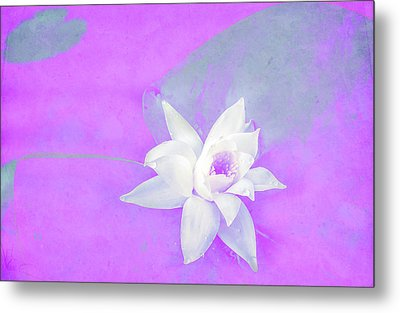 Violet And White Waterlily Metal Print by Nat Air Craft