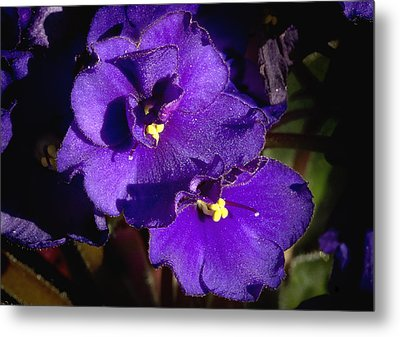 Metal Print featuring the photograph Violets by Phyllis Denton