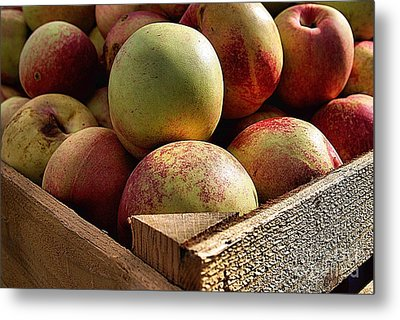 Virginia Apples  Metal Print by John S