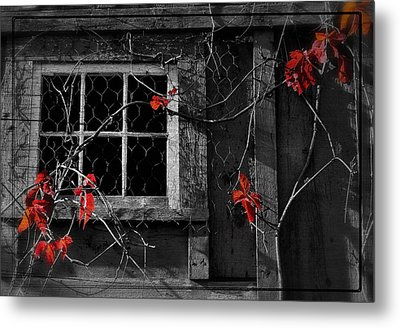 Virginia Creeper Metal Print by Thomas Schoeller