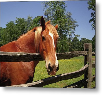 Metal Print featuring the photograph Virginia Lady by Don Struke
