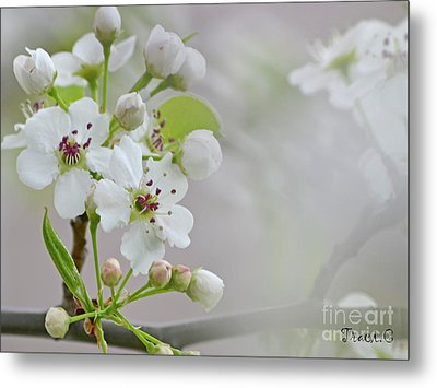 Visions Of White Metal Print by Traci Cottingham