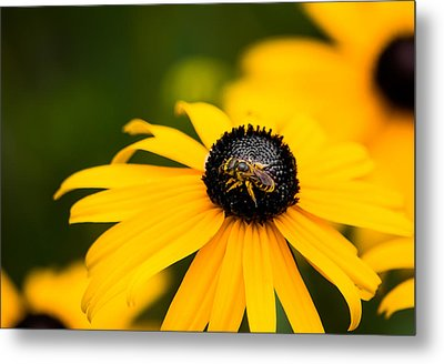 Visitor In The Garden Metal Print by Shelby  Young