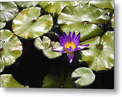 Vivid Purple Water Lilly Metal Print by Teresa Mucha
