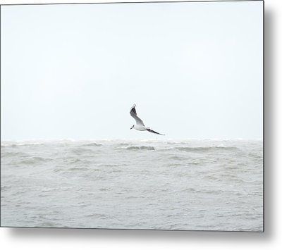 Metal Print featuring the photograph Vol Sur Mer Agitee by Marc Philippe Joly