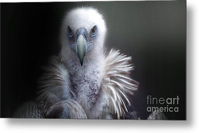 Metal Print featuring the photograph Vulture 2 by Christine Sponchia
