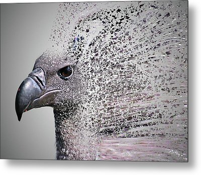 Vulture Break Up Metal Print