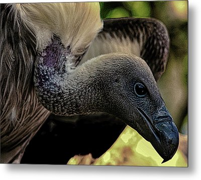 Vulture Metal Print by Martin Newman