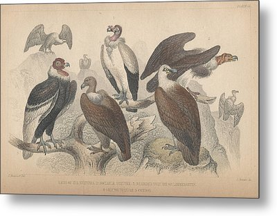 Vultures Metal Print by Dreyer Wildlife Print Collections