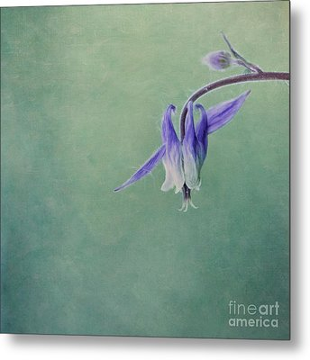 Fairy Flower Metal Print by Priska Wettstein