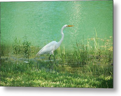 Metal Print featuring the photograph Wading Egret by Kathleen Stephens