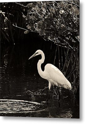 Wading For Food Metal Print by Ron Dubin
