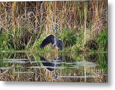 Wading In Heron Metal Print by Cathy  Beharriell