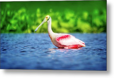 Wading Spoonbill Metal Print by Mark Andrew Thomas