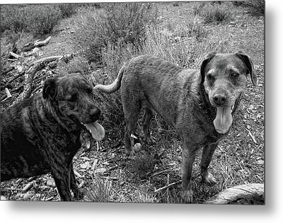 Wagging Tongues Metal Print by Donna Blackhall