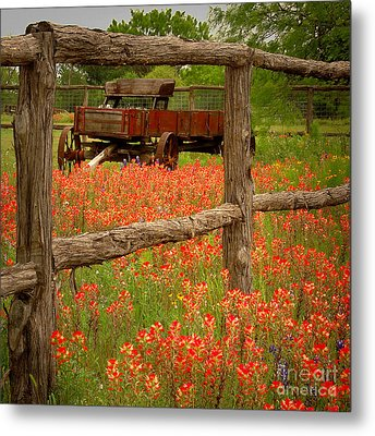 Wagon In Paintbrush - Texas Wildflowers Wagon Fence Landscape Flowers Metal Print by Jon Holiday