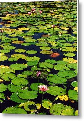 Wailea Water Lilies Metal Print by Jennifer Ott