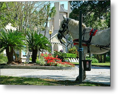 Waiting Horse Metal Print by Bruce Gourley