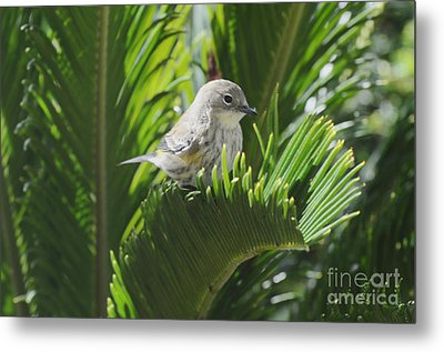Waiting Or Thinking Metal Print by Debby Pueschel