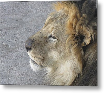Metal Print featuring the photograph Waiting by Tammy Sutherland