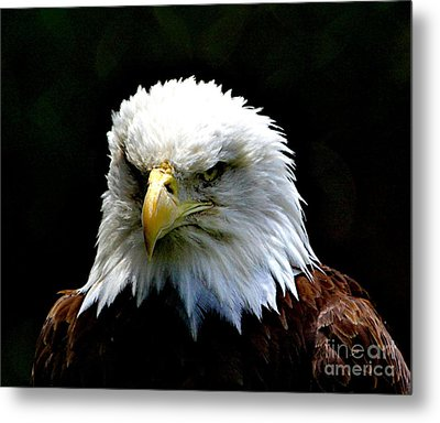 Wake Up America Metal Print by Robert Pearson