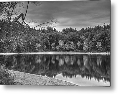 Walden Pond Fall Foliage Concord Ma Black And White Metal Print