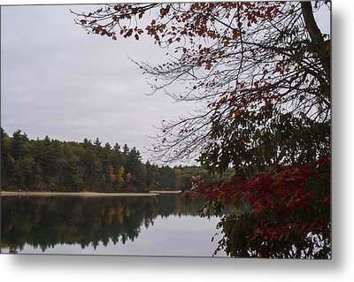Walden Pond Fall Foliage Le 2aves Concord Ma Metal Print