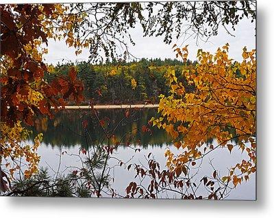 Walden Pond Fall Foliage Leaves Concord Ma Metal Print