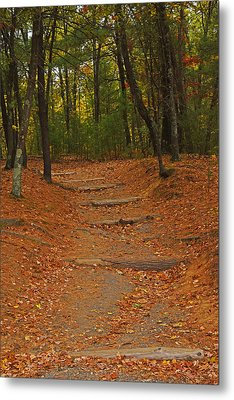 Walden Pond Path Into The Forest Metal Print