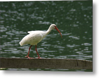 Walk In The Park Metal Print by Michael Albright
