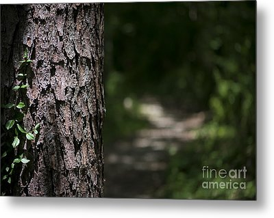 Metal Print featuring the photograph Walk In The Woods by Andrea Silies
