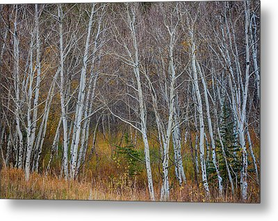 Metal Print featuring the photograph Walk In The Woods by James BO Insogna
