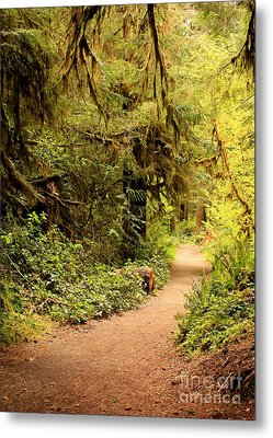 Walk Into The Forest Metal Print by Carol Groenen