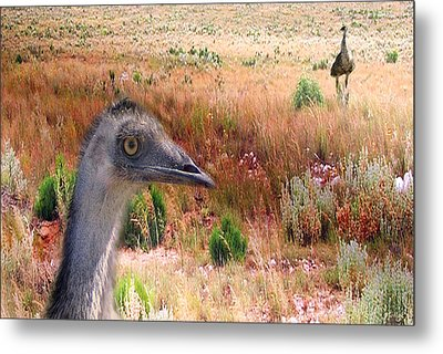 Walkabout Metal Print by Holly Kempe