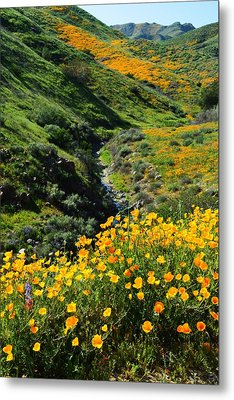 Walker Canyon Vista Metal Print