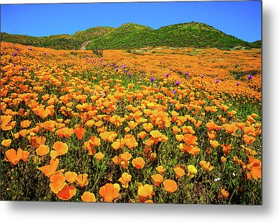 Walker Canyon Wildflowers Metal Print
