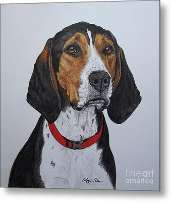 Walker Coonhound - Cooper Metal Print