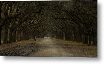 Walking In Wormsloe  Metal Print by Stacy Sikes