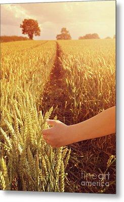 Walking Through Wheat Field Metal Print