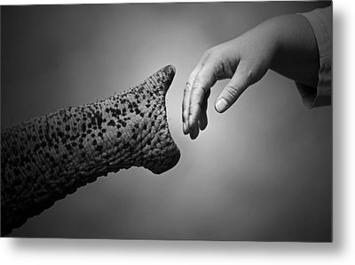 Walking Together .... Metal Print by Antje Wenner