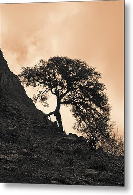 Walking Tree Metal Print