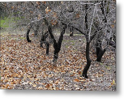 Metal Print featuring the photograph Walking Trees. by Viktor Savchenko