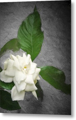 Metal Print featuring the photograph Wall Flower by Carolyn Marshall
