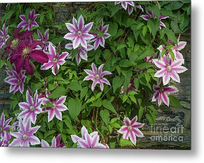 Metal Print featuring the photograph Wall Flowers by Chris Scroggins