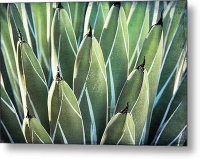 Metal Print featuring the photograph Wall Of Agave  by Saija Lehtonen