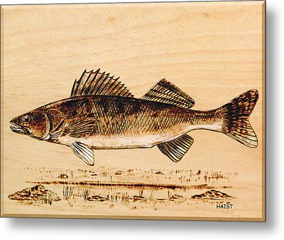 Walleye Metal Print by Ron Haist
