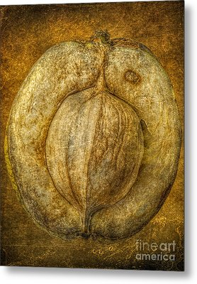 Walnut Texture Macro Stil Life Metal Print by Randy Steele